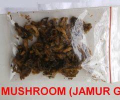 ganja weed mushroom magic psilocybin psychedelic psychoactive indole alkaloids shrooms
