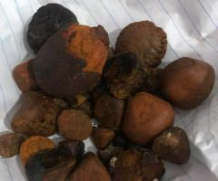 Quality Ox Cow Gallstone For Sale