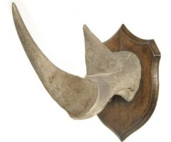 Rhino Horn for sale, 5kg of rhino horn for sale