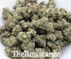 XXX OG – TOP SHELF